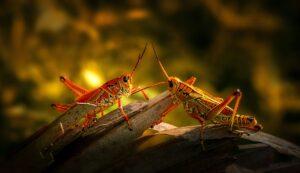 brown grasshopper on brown wooden surface